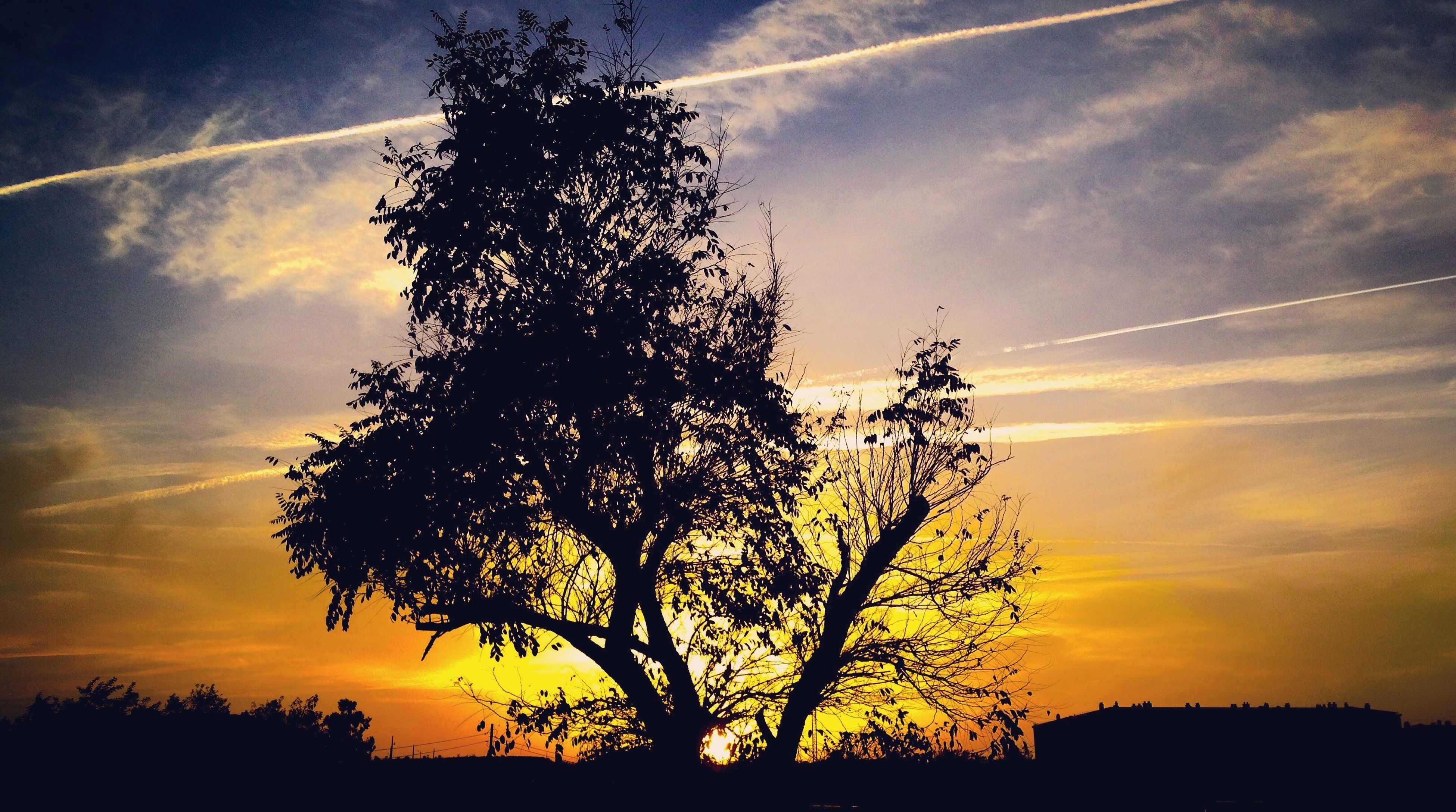 sunset, sky, nature, silhouette, tree, beauty in nature, no people, sun, growth, low angle view, scenics, tranquility, outdoors, cloud - sky, day