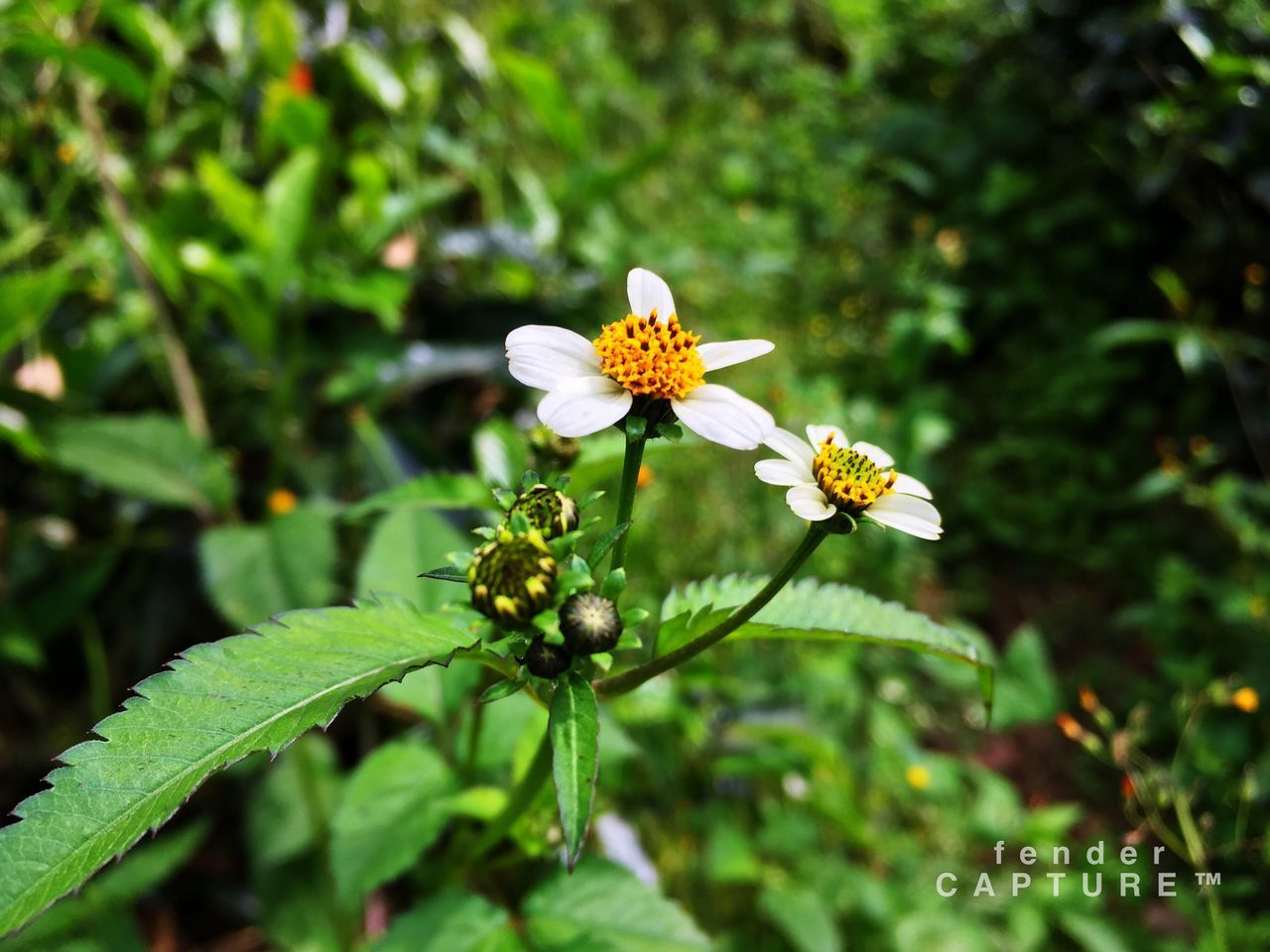 flower, growth, nature, focus on foreground, day, beauty in nature, green color, plant, petal, fragility, outdoors, freshness, blooming, leaf, no people, flower head, close-up