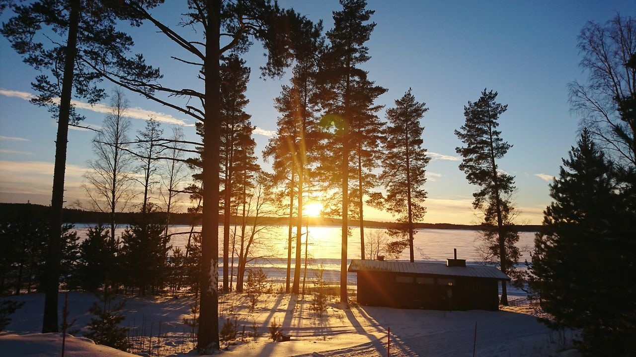 Sunset Tree Tourism Vacations Sky Nature Water Travel Destinations No People Outdoors Scenics Landscape Beauty In Nature Day Cold Temperature Finnland Inbtree Nature Young Women Beauty In Nature Nofilternoedit Nofilter