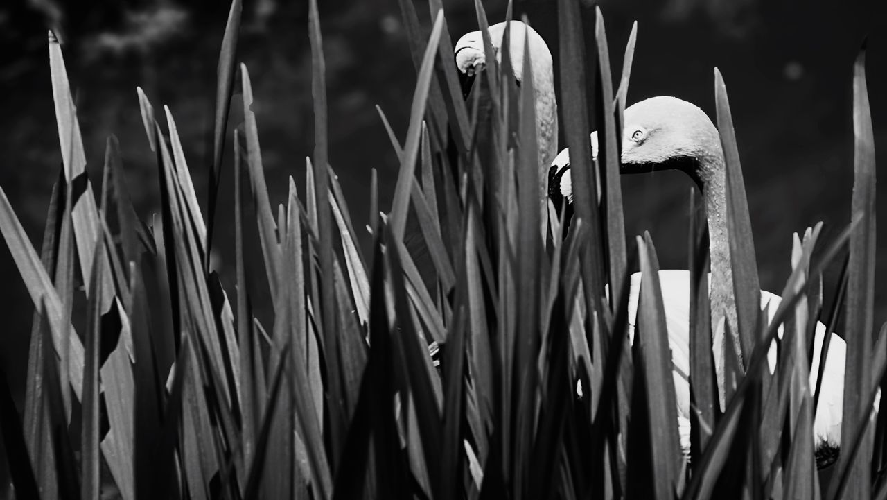 When you are caught peeking into their privacy! Lol Nature Flamingo Blackandwhite Monochrome Zoo Black And White Philadelphia Bnw_worldwide Blackandwhite Photography Philadelphiaphotographers TheMinimals (less Edit Juxt Photography) EyeEm Nature Lover Sonya7r Sonya7rii
