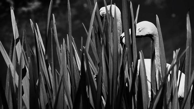 When you are caught peeking into their privacy! Lol Nature Flamingo Blackandwhite Monochrome Zoo Black And White Philadelphia Bnw_worldwide Blackandwhite Photography Philadelphiaphotographers TheMinimals (less Edit Juxt Photography) EyeEm Nature Lover Sonya7r Sonya7rii