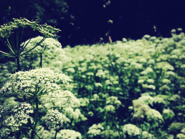 ~Flowerpower~