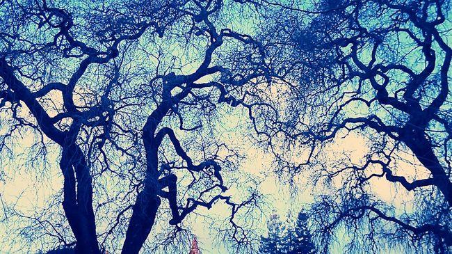 Winter Trees Dr.Seuss Clouds