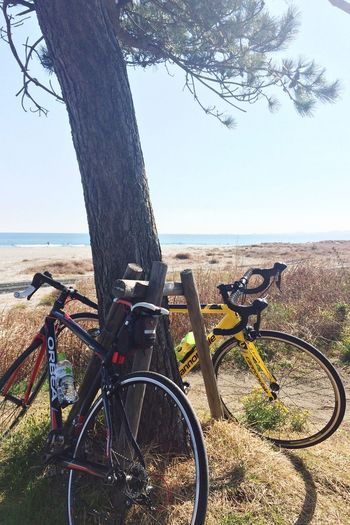 Pottering Bicycle Cycling 徳島県 小松海岸。今日は穏やかな良い天気(^。^)