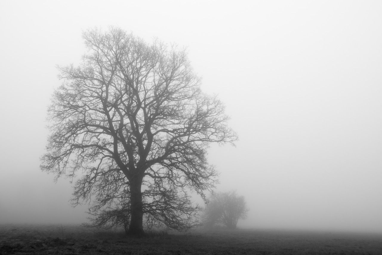 Bare Tree On Field In Foggy Weather Against Clear Sky