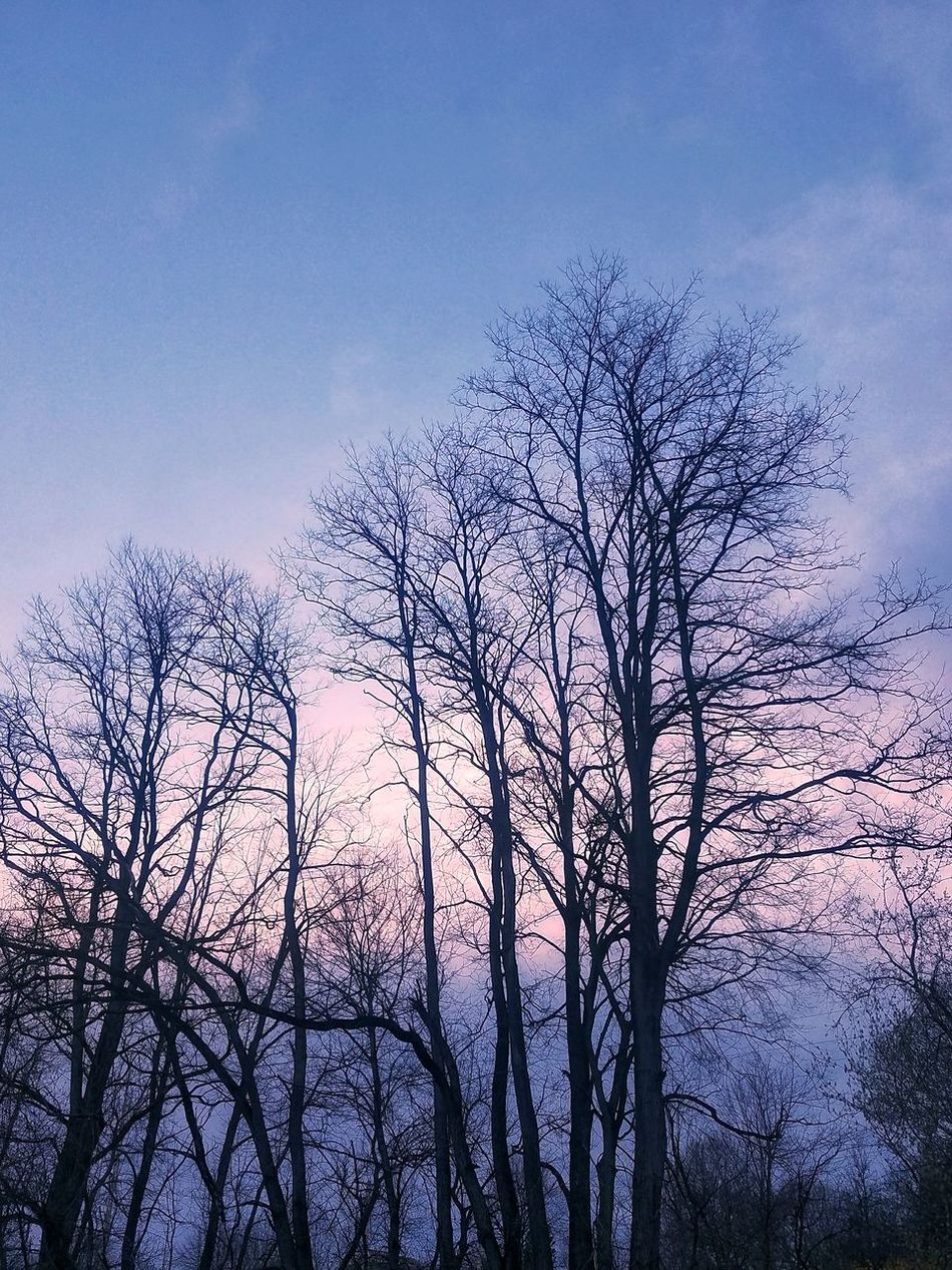 Sky No People Low Angle View Silhouette Pink Sky Full Frame Cloud - Sky Trees Beauty In Nature Fine Art Photograhy From My Point Of View Pastel Colors Pastel Clouds Pinks And Blues Bare Trees