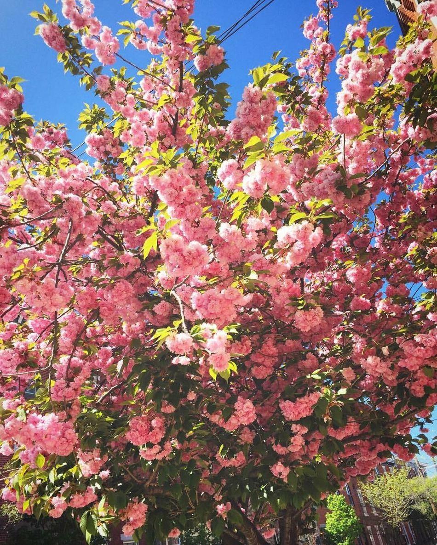 Enjoy this beautiful morning http://youtu.be/cJqjlFGZxtE ATouristInMyOwnCity TheSidewalksOfTheCity ScenesFromTheStreet EyeEm Best Shots