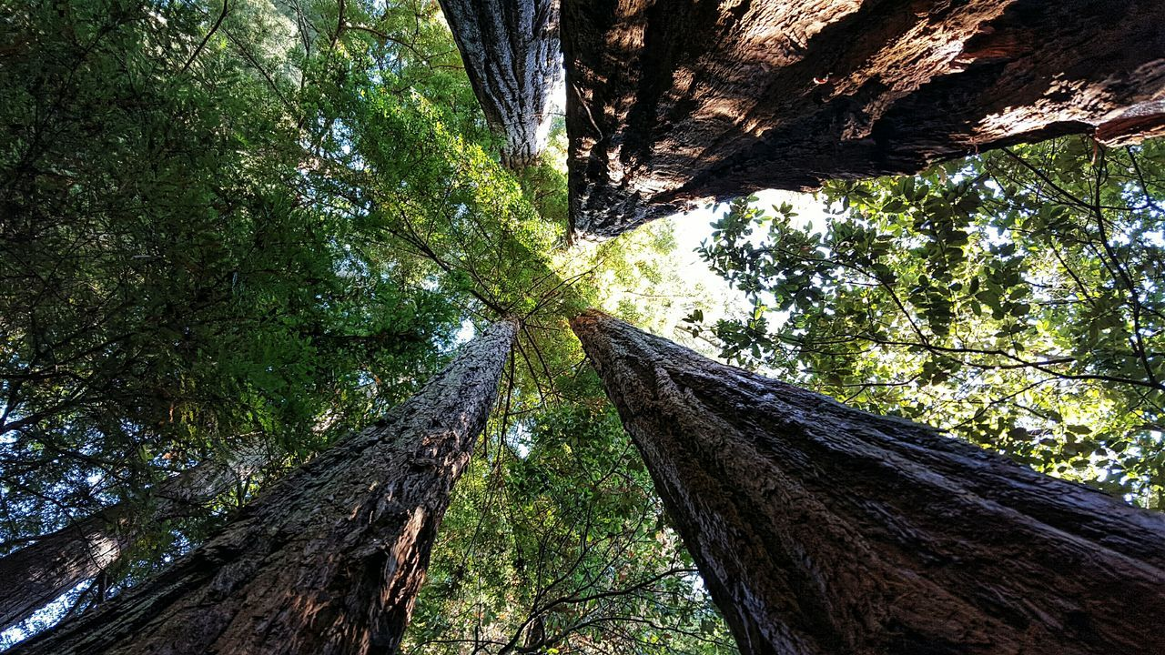 Naturelovers Redwoods California Myperspective FavoritePhotos California Beautiful Nature Beautiful