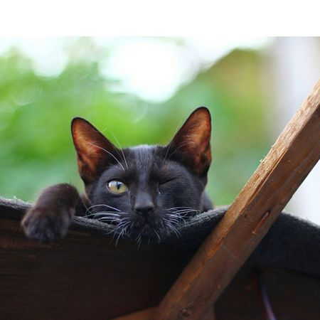 :: Im watching :: Thug Thuglife Black Chill Rooftop Relax Inhale Wink Cat Catsofinstagram Green Instapets Petsofinstagram Bokeh Candid Life Love Batman