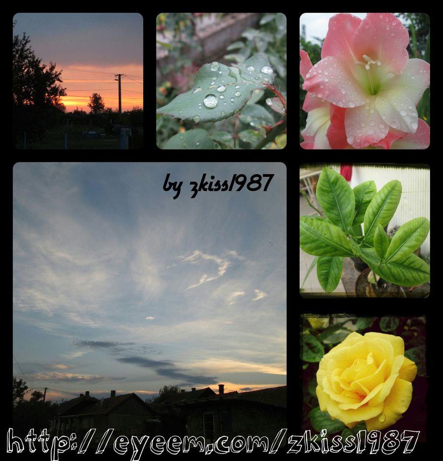 Elmúlt napok kèpei Photomozaik EyeEm Nature Lover Nature Art