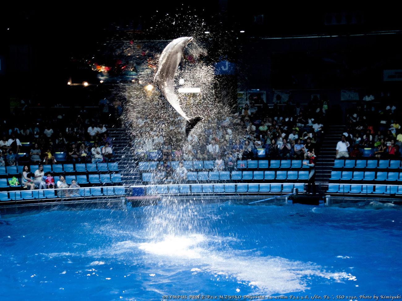 跳ねる Dolphin Aquarium 蔵出し(^^;) 品川アクアスタジアム ドルフィンパーティー(エプソン品川アクアスタジアム)