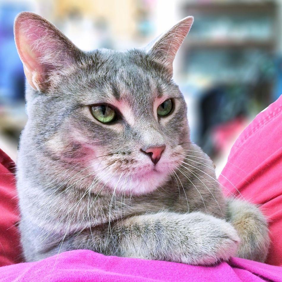 Have a magnificent Mel Monday, friends. Kitty kisses ?? Cat Mel&BomBi Tadaa Community Cute Pets