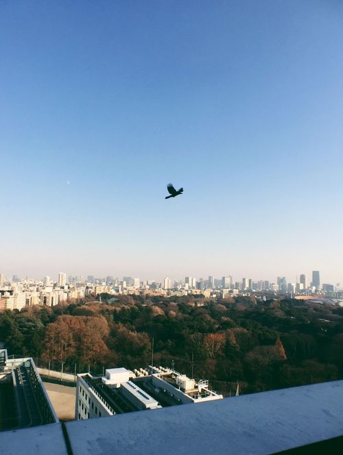 From The Rooftop Landscape Tokyo Bird Flying High
