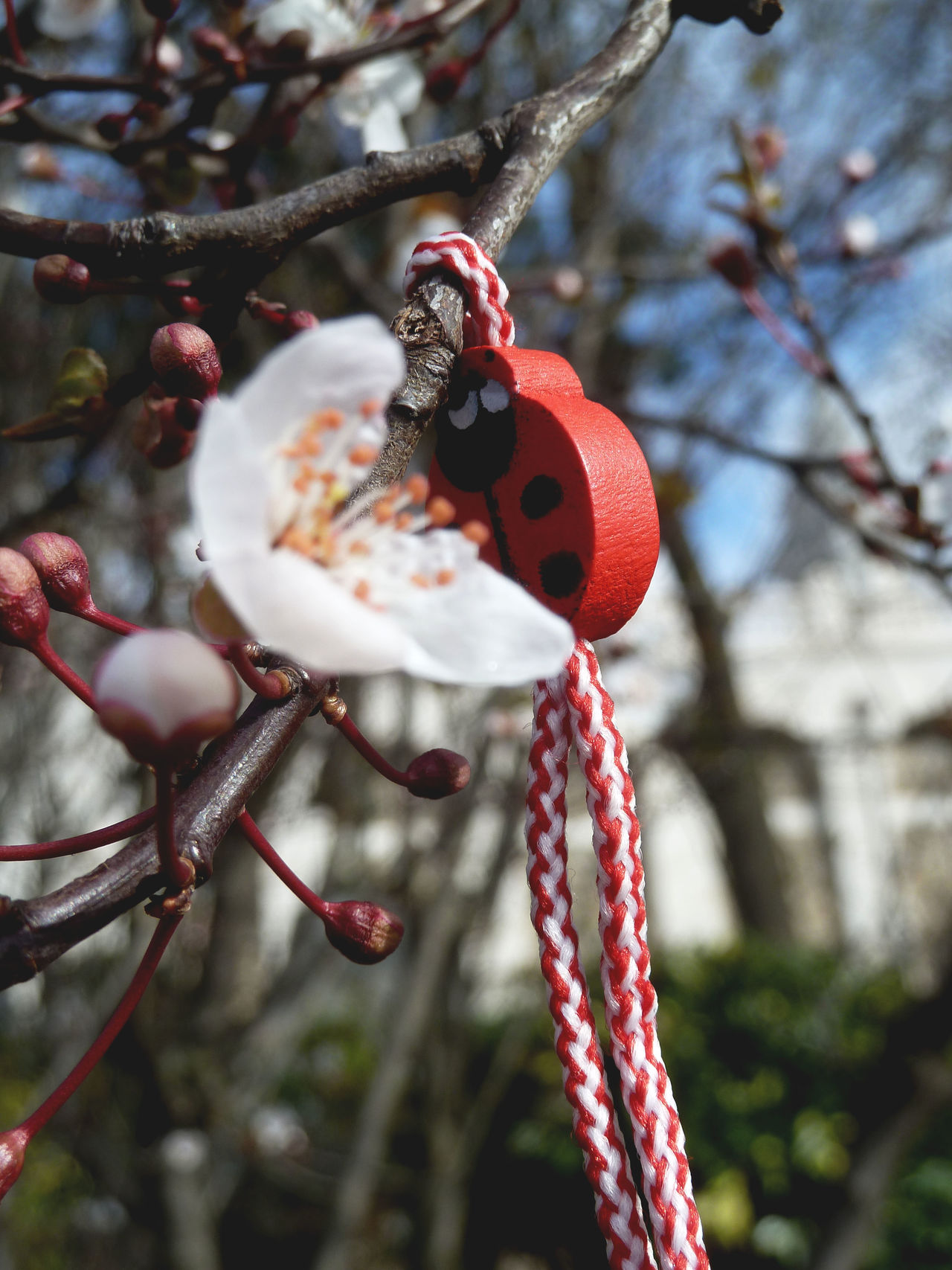 Beauty In Nature Day Ladybug Pendant Nature Outdoors Rot Red White France Tree White Bloom Tree