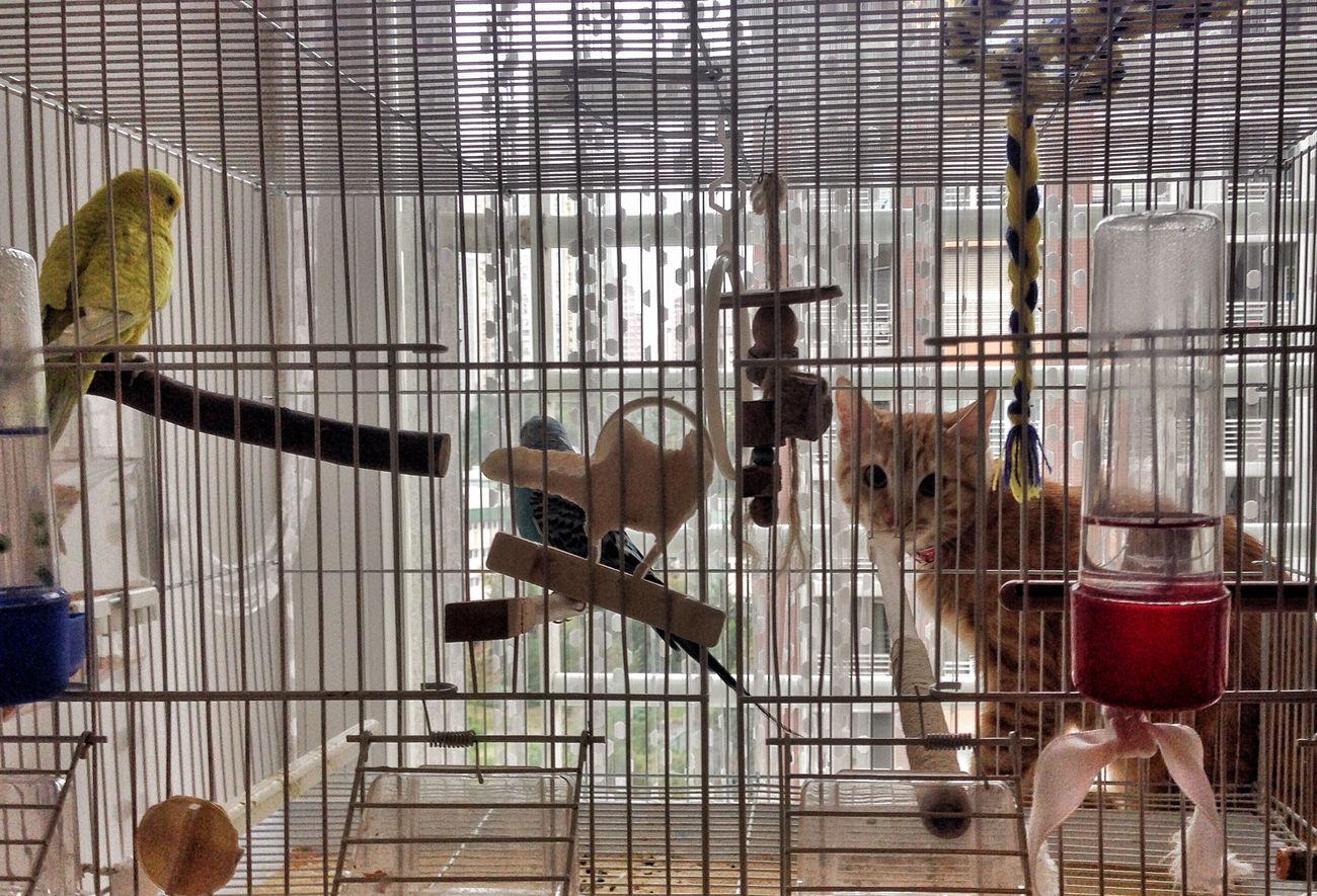 Medium Group Of Animals Cat Cage Zoology Animals Bird