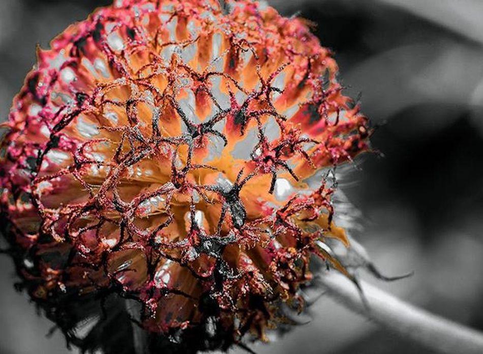 splash... splash... splash Rudbeckia flower in macro 1) Summertime_mega_challenge 2) Tgif_colorsplash 3) Pocket_colorsplash 4) Loves_colorsplash 5) Igpowersplash 6) Greatsplash 7) Splash_bnw 8) Bnwsplash_flair 9) Splash_greece 0) Colorsplash_fun 1) Colorsplash_legends 2) Tv_colorsplash 3) Mysplashedits 4) Bd_colorsplash 5) Splashmasters_family 6) Rsa_macro 7) Electric_macro 8) Macroworld_tr 9) Best_expression_splash 0) Colorsplash_captures 1) Passion_for_splashing 2) Macroclique 3) Pocket_colorsplash 4) Ig_splash 5) Cool_splashes 6) macro_mood 7) macro_holic 8) igshotz 9) splash_oftheworld 0) bnwsplash_kings