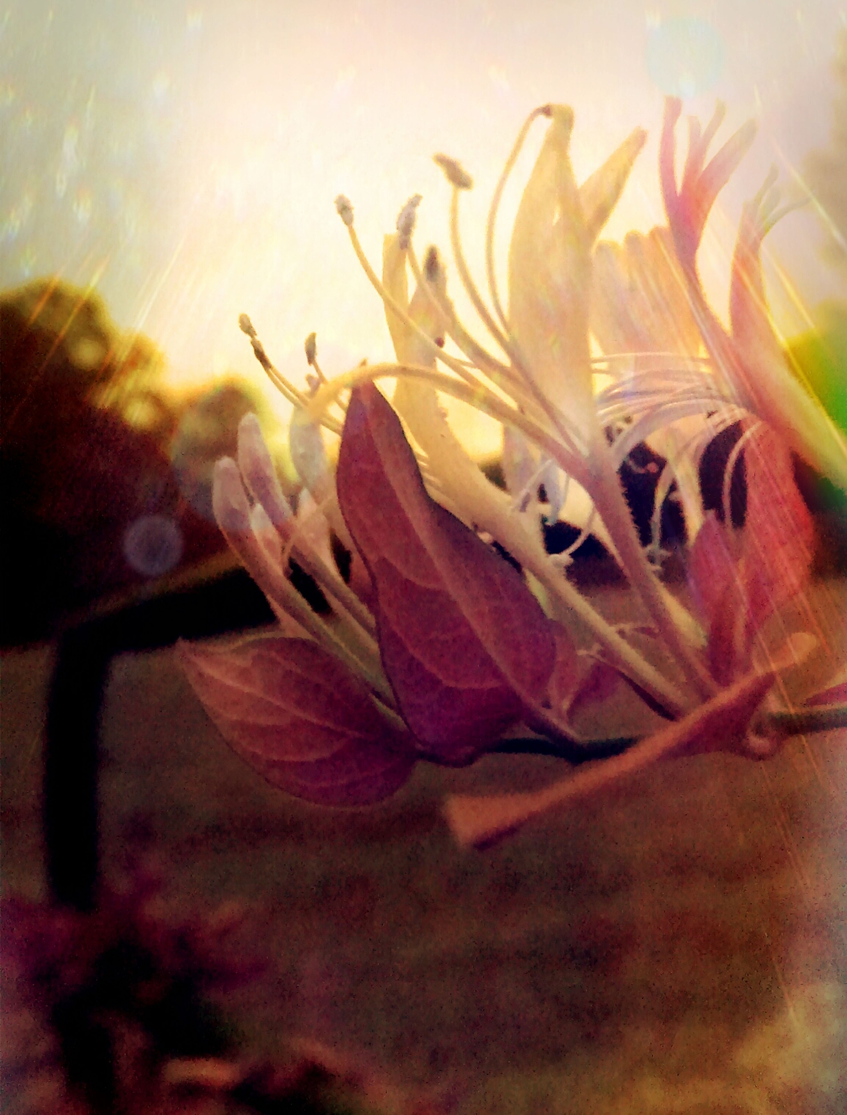 flower, close-up, fragility, petal, plant, growth, flower head, freshness, beauty in nature, nature, selective focus, focus on foreground, single flower, stem, no people, orange color, outdoors, auto post production filter, extreme close-up