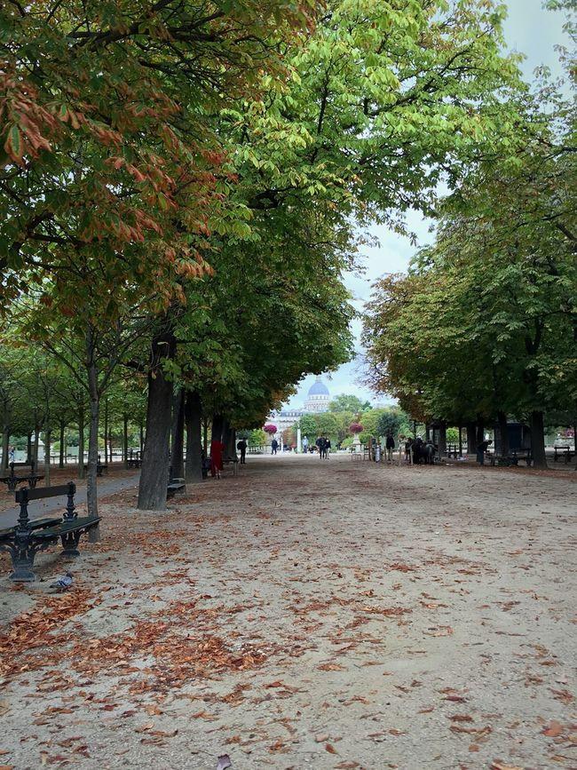 Park - Man Made Space Jardin Du Luxembourg Paris Nature Autumn Autumn Leaves
