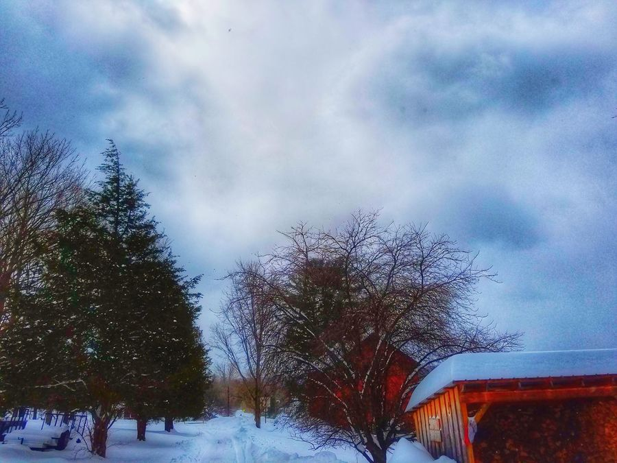 Tree Rain No People Nature Sky Outdoors Rainy Season Beauty In Nature Cloud - Sky RainDrop Day Close-up Beauty In Nature Deep Snow Blizzard2017 Tree Nature Snow Cold Temperature Winter Weather