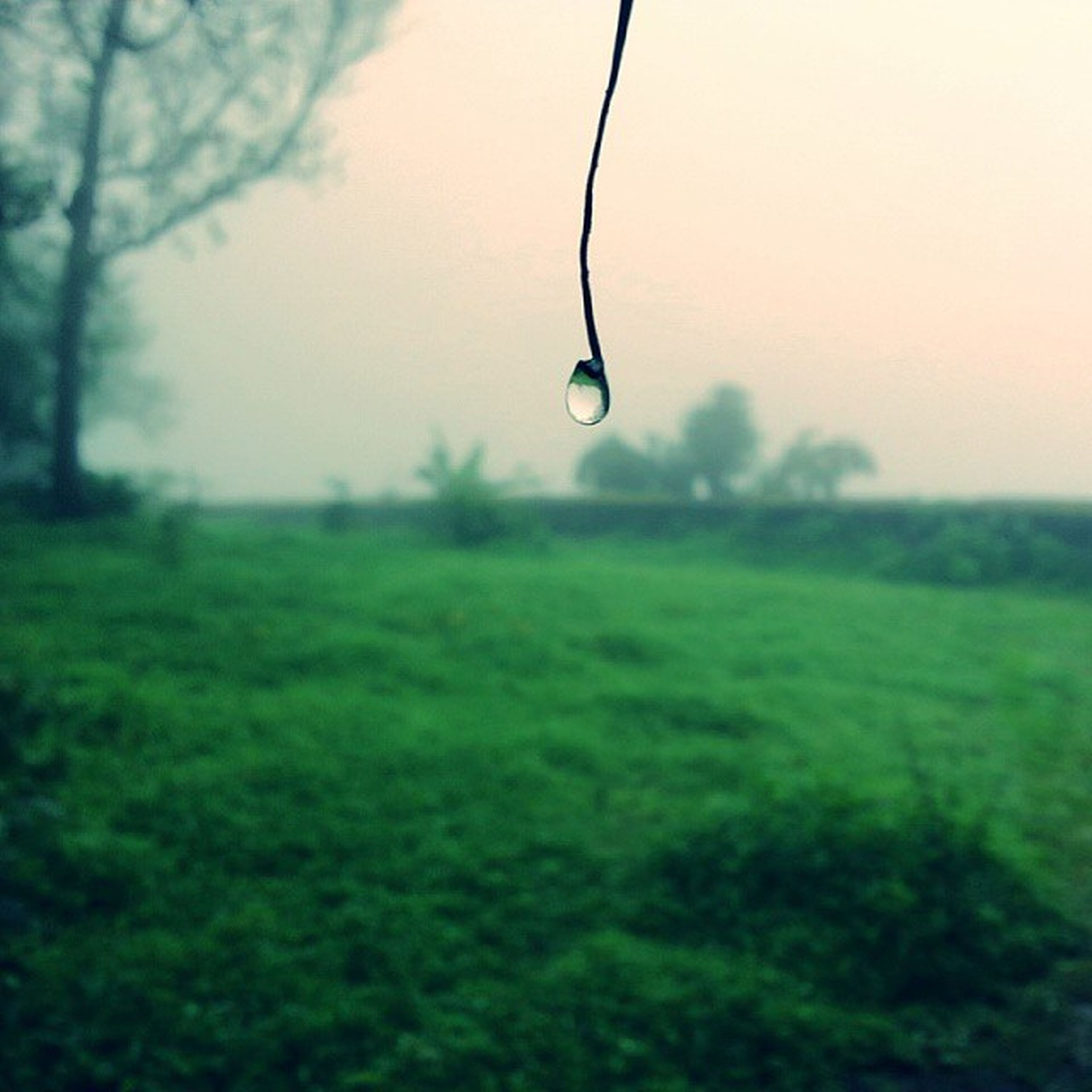 drop, water, focus on foreground, nature, grass, beauty in nature, close-up, wet, fragility, tranquility, selective focus, green color, transparent, sky, dew, mid-air, growth, water drop, raindrop, tranquil scene