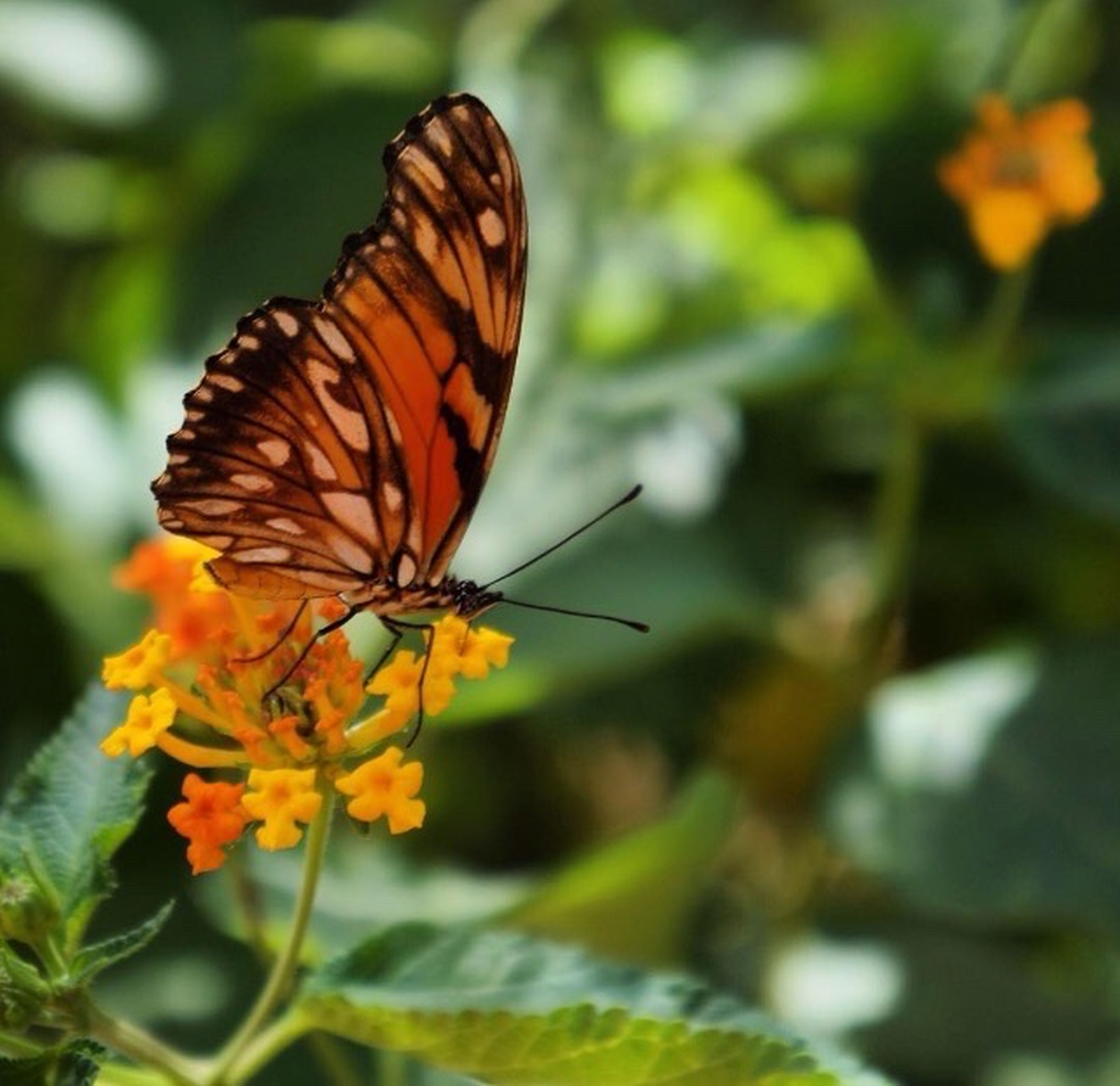 butterfly - insect, insect, one animal, animals in the wild, focus on foreground, animal themes, nature, close-up, beauty in nature, plant, flower, orange color, outdoors, no people, fragility, animal wildlife, freshness, day, pollination