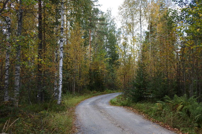 I just love walking roads like this one :P Autumn Beauty In Nature Country Road Day Empty Road Forest Growth Nature Outdoors Remote Road Single Lane Road The Way Forward Vanishing Point WoodLand