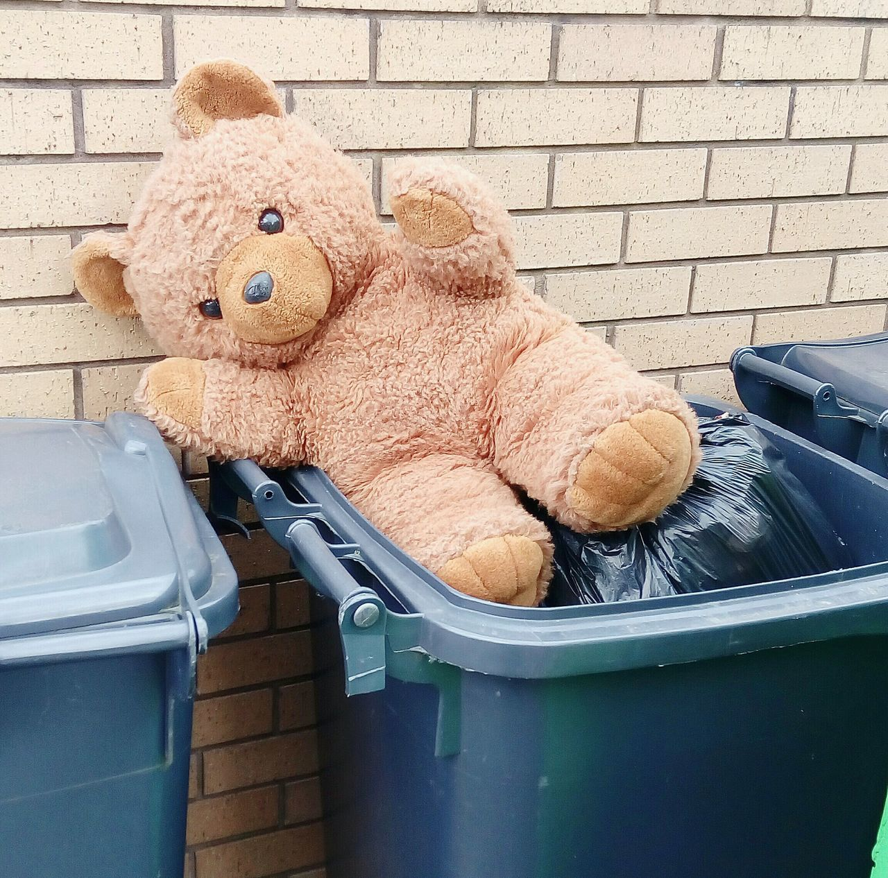 Hello World Check This Out Ted has been left in Dustbin looks like no Ted3 Teddylove Brick Wall