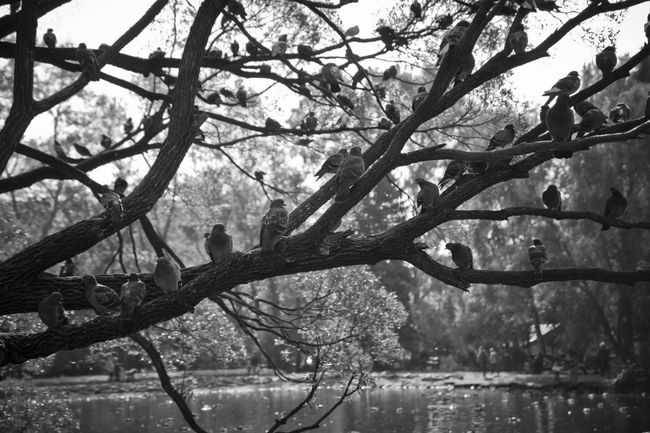 Autumn Branches Branches And Sky Calm Ekaterinburg Many Birds Melancholic Cityscapes Melancholic Landscapes Melancholy Nature No People Pegions Pigeons On The Top Tree Tree Branches