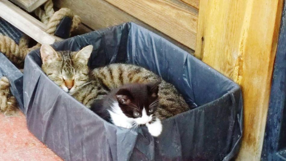 Kedi Cat Cat Lover EyeEm Animal Lover Family Animal Lover Baby Animal