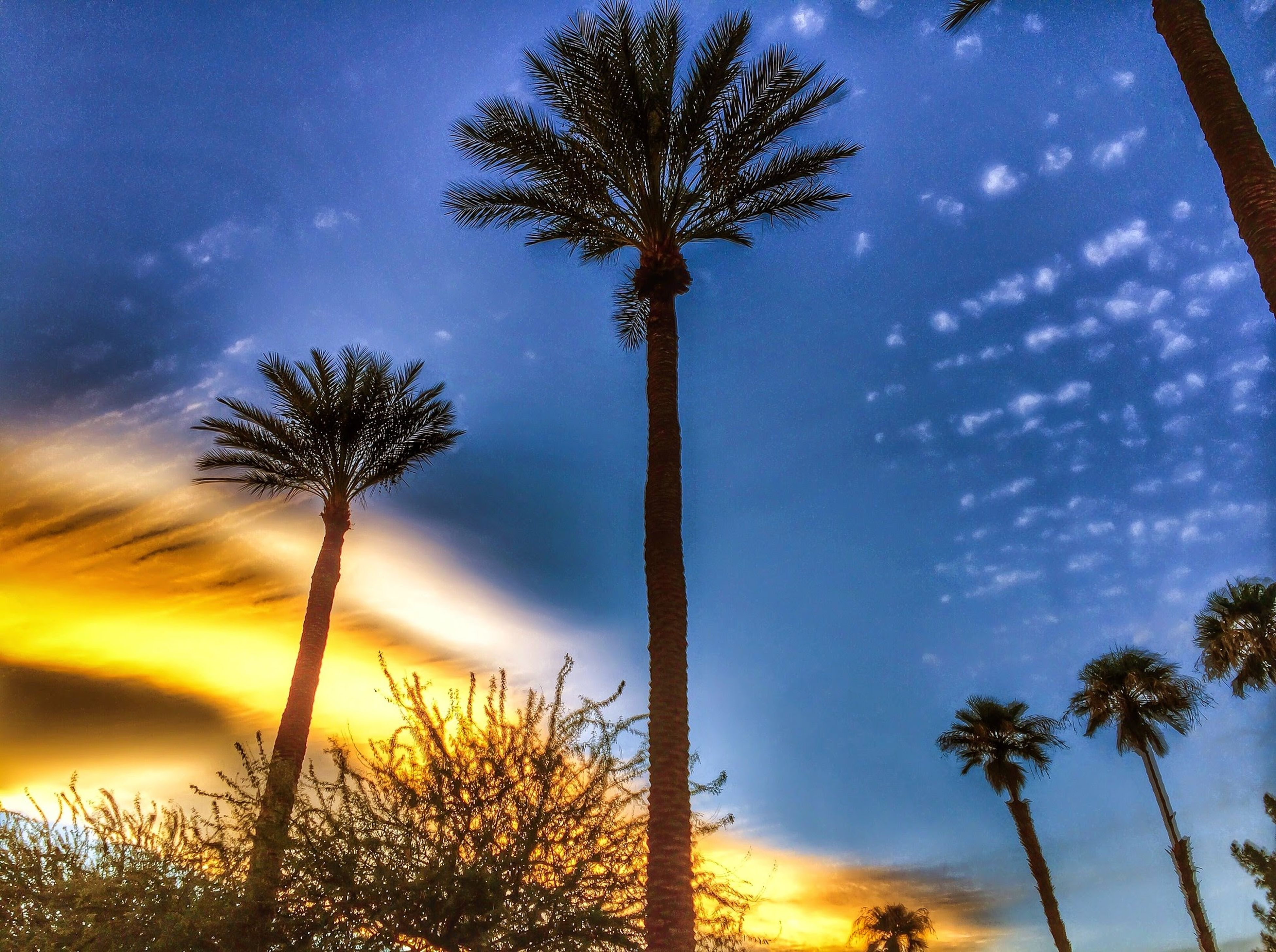 low angle view, sky, tree, silhouette, growth, palm tree, beauty in nature, nature, tranquility, cloud - sky, sunset, tree trunk, scenics, cloud, tranquil scene, branch, outdoors, no people, blue, tall - high