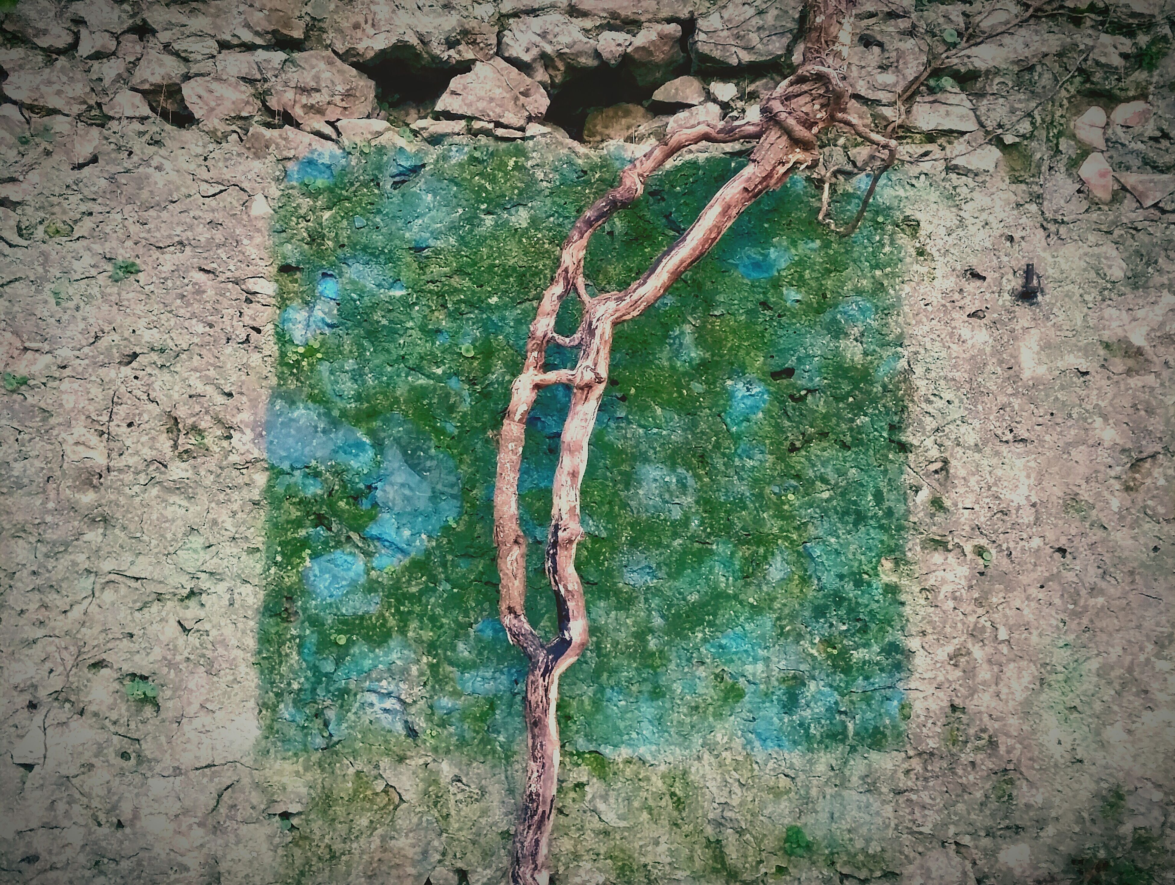 growth, wall - building feature, tree, plant, tree trunk, textured, green color, nature, built structure, day, outdoors, no people, ivy, architecture, wall, stone wall, high angle view, growing, branch, rough