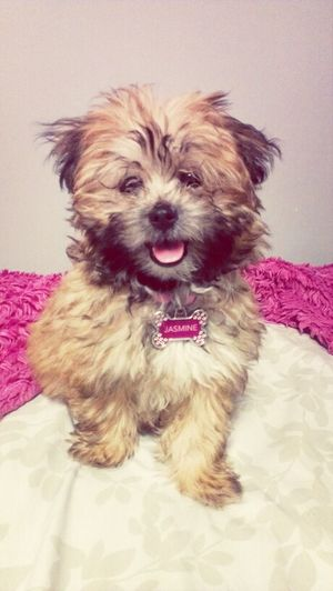 Brianna's dog Jasmine :)