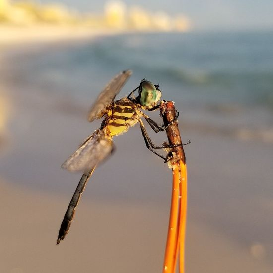 EyeEm Selects Insect One Animal Animals In The Wild Animal Wildlife Animal Themes No People Day Outdoors Nature Close-up Dragon Fly