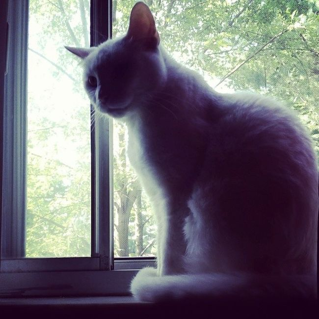 Catsofinstagram Cats Fiercefelines Whitecats roxiebaby familiar lazycatdaze