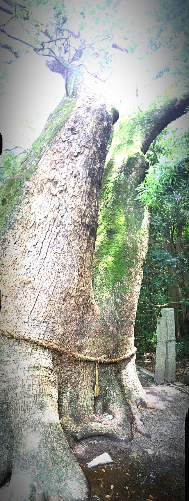 Taking Photos Relaxing IPhoneography Awaji Awaji Island
