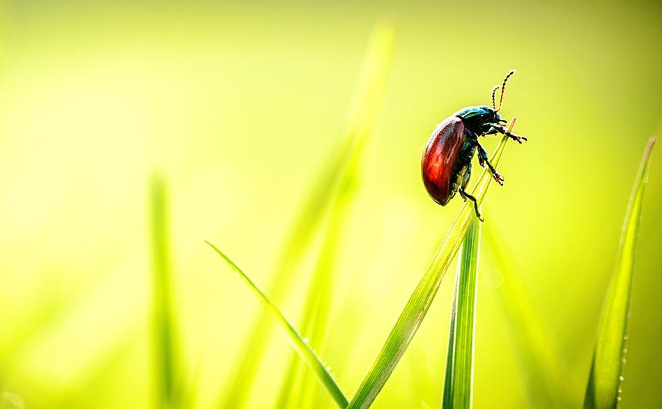 Beautiful stock photos of verlobung,  Animal Themes,  Animals In The Wild,  Beauty In Nature,  Blade Of Grass