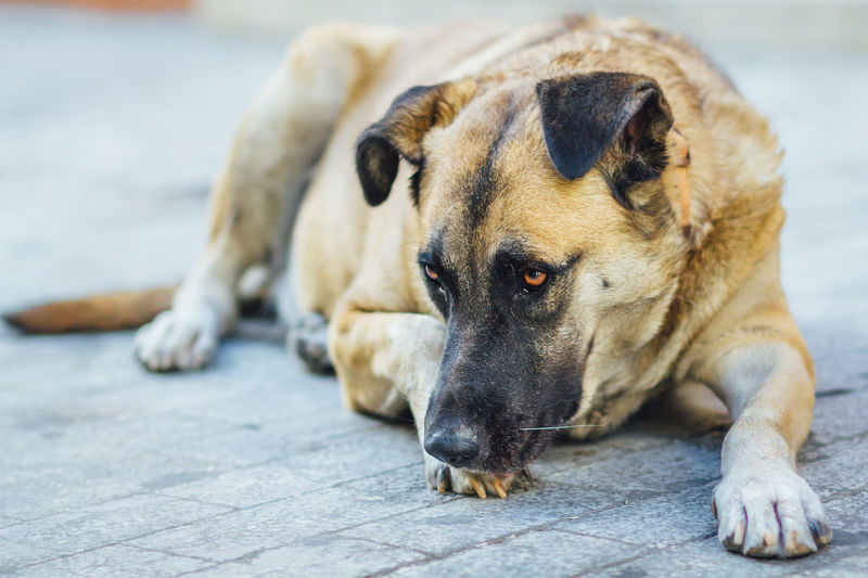 Abandon Animal Animal Head  Athens Canine City Life Comfortable Dog Domestic Animals Mammal Outdoors Pet Collar Pets Portrait Relaxation Relaxing Resting Sad Selective Focus Street Dog