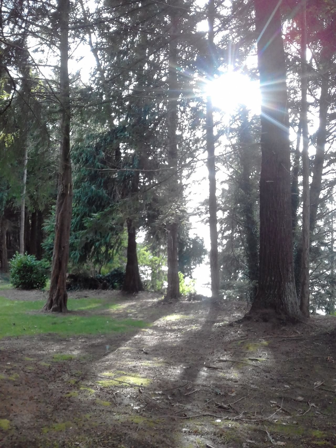 'Johnny's Spot Nature Sunlight Dusky SkyNo People Tranquility Beauty In Nature Scenics Forest walk