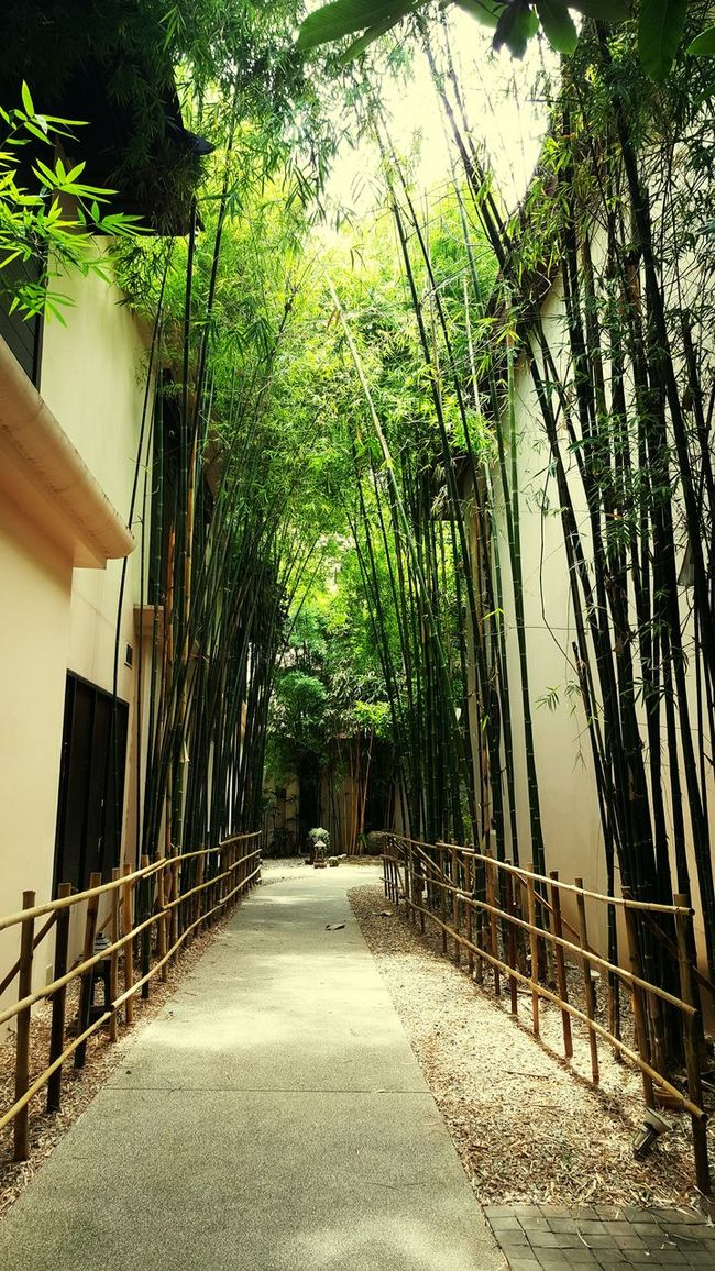 Pathway Path In Nature Bamboo Tree... Hidden Gardens Secret Spot Relax Time  In The Forest Garden Asianstyle