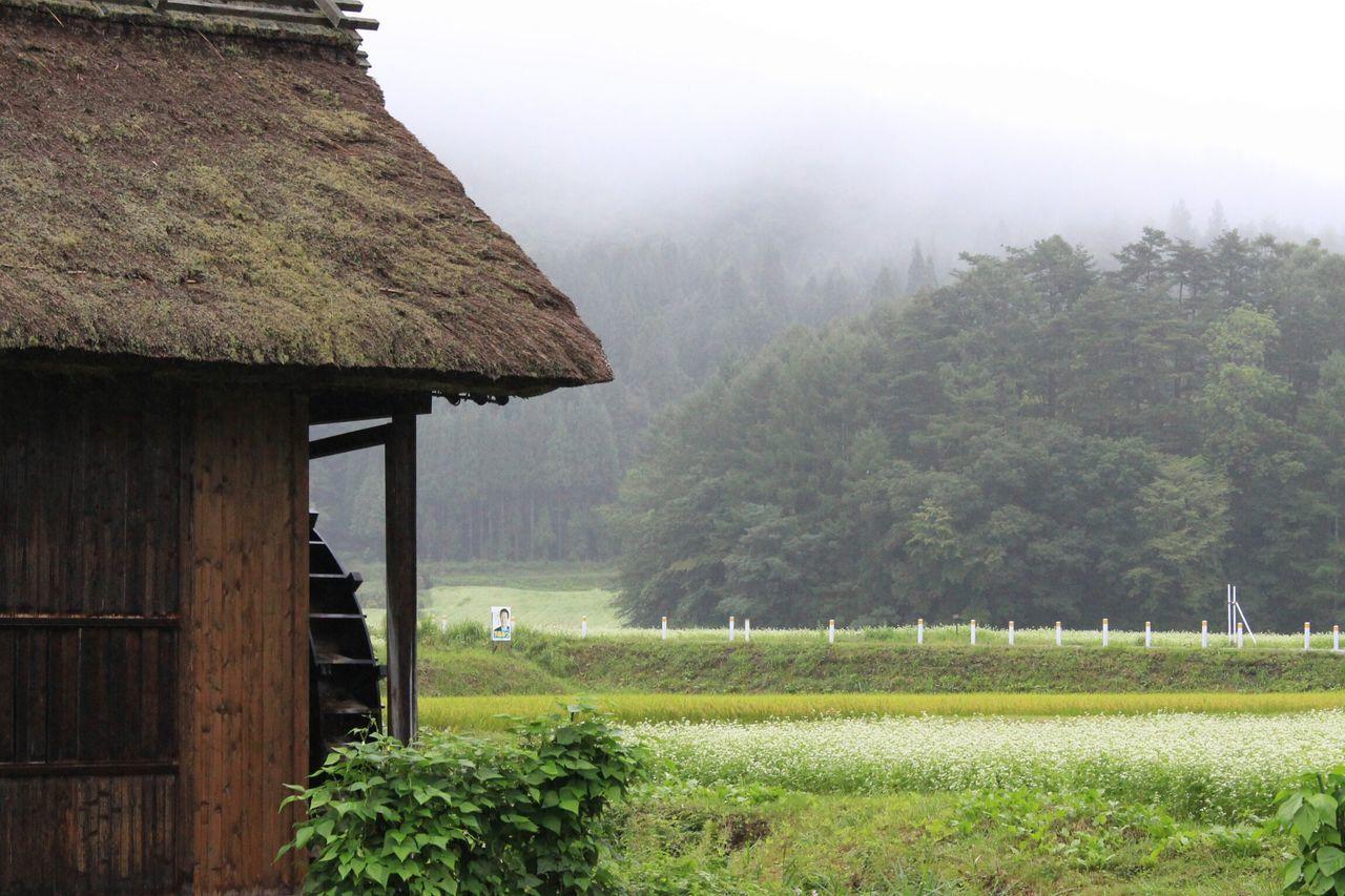 蕎麦畑を見つけた♪霧雨でなんかボヤけた感じ😥 EyeEm Best Shots Flowers Japanese Style Enjoying Life EyeEmBestPics EyeEm Gallery EyeEmbestshots おはよう😃8月もラスト😅名残惜しい💦
