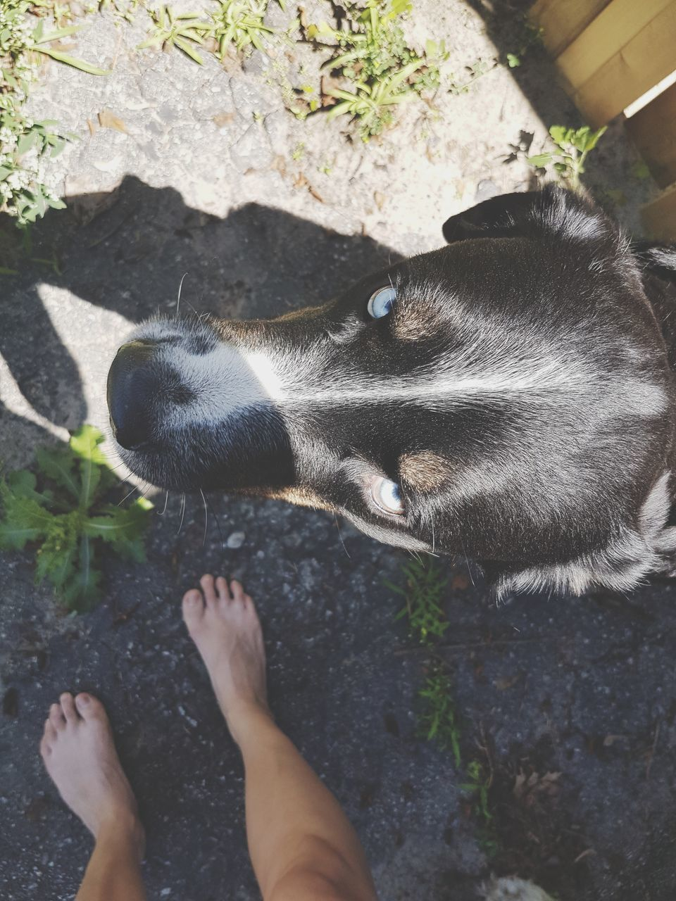 animal themes, one animal, domestic animals, pets, mammal, real people, one person, day, outdoors, low section, human leg, human body part, high angle view, domestic cat, plant, feline, nature, close-up, human hand