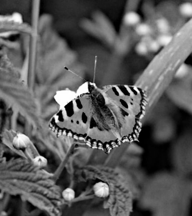 Popular Photo EyeEm Nature Lover Nature EyeEm Best Shots - Nature Nature Collection Black And White Monochrome Taking Photos Streamzoofamily ThingsWithWings