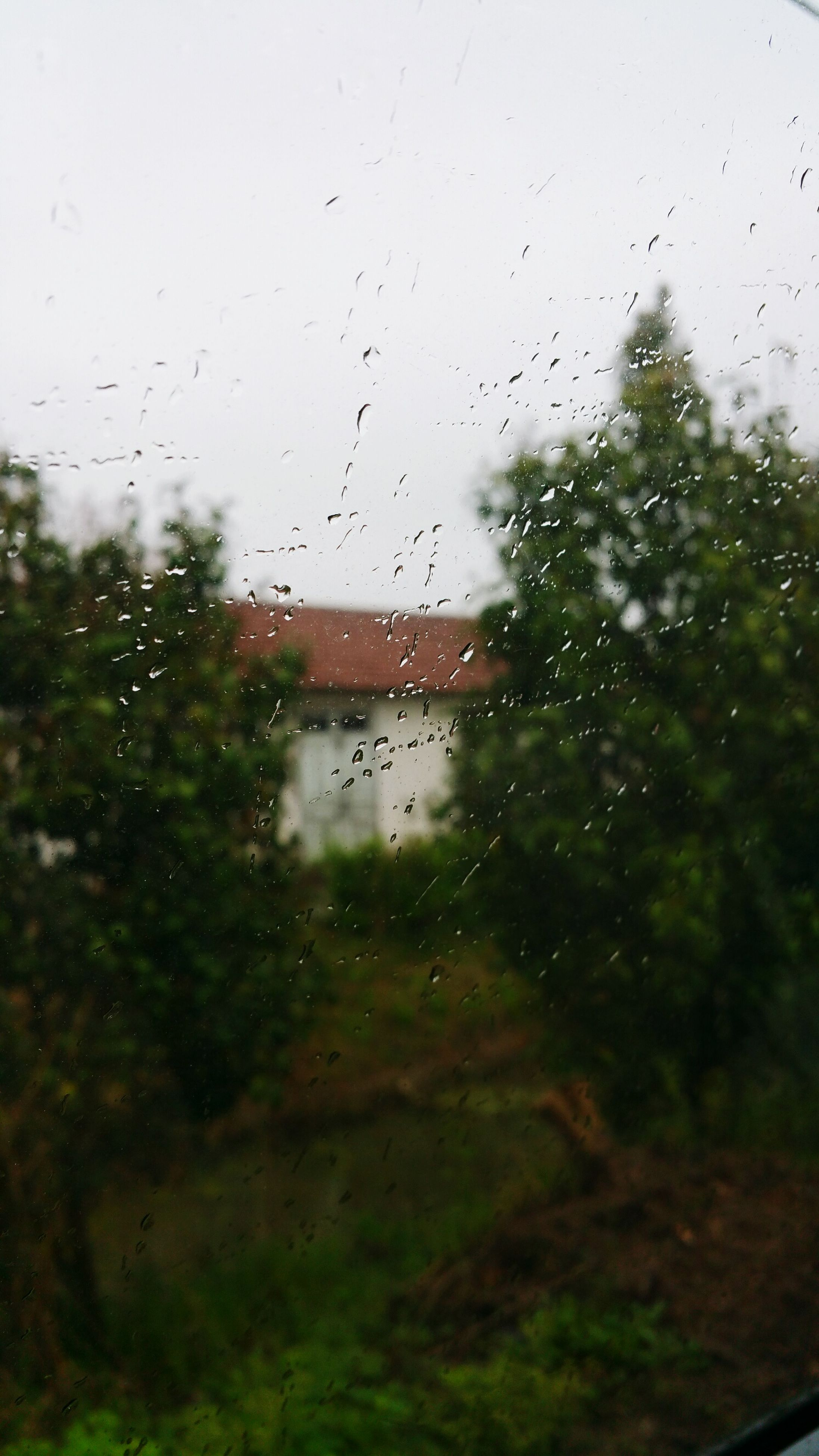 drop, wet, window, water, transparent, rain, glass - material, raindrop, weather, indoors, sky, season, glass, tree, focus on foreground, built structure, monsoon, nature, architecture, no people
