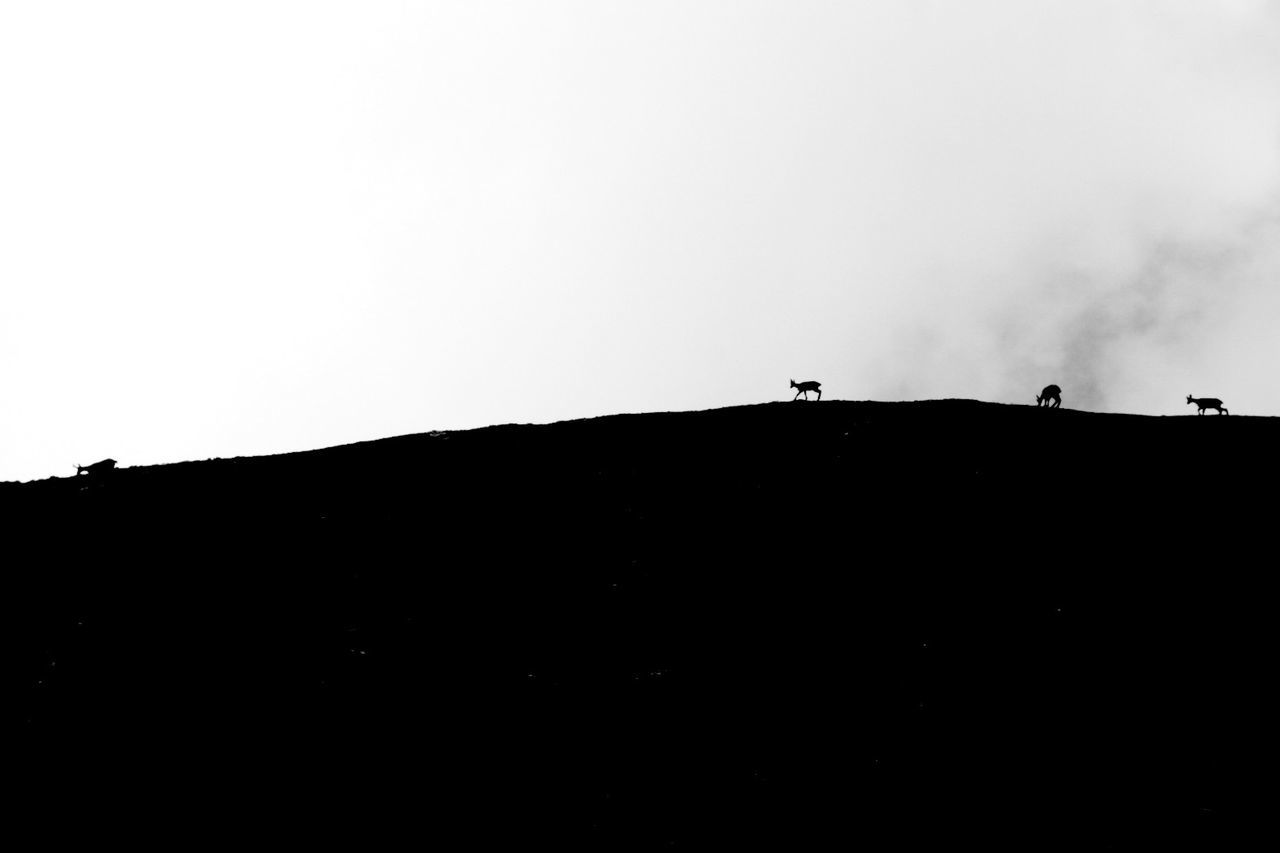 Silhouette Low Angle View Tranquility Outdoors Nature Mountain Black And White Scenics Animals In The Wild Mouflon TakeoverContrast
