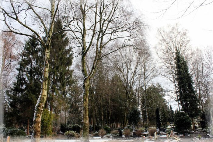 Bare Tree Cold Cold Temperature Eis Forest Friedhof Grave Graves Graveyard Beauty Gronau Growth Ice Landscape No People Non-urban Scene Outdoors R.I.P. Schnee Season  Snow Tree Weather Winter Winter Wintertag