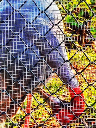 Sarus Crane Animal Photography Animal In The Cage Flamingo In The Cage Bird In The Cage Flamingo Collection Bird Bird Photography Bird Collection Bird Beauty Bird In The Zoo Bird At The Zoo Flamingo Flamingo Beauty Flamingo In The Zoo Flamingo At The Zoo Flamingo Photography
