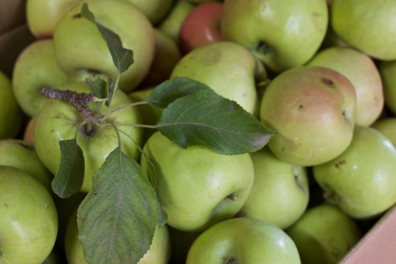 Apple Apples Close Up Close-up Food Food And Drink Fresh Fruit Freshness Fruit Full Frame Green Apples  Healthy Eating Homegrown Homegrown Fruits Homegrown Produce Outdoors Red Apple Seasonal Seasonal Fruit