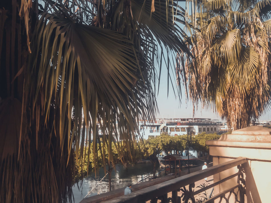 Architecture Beauty In Nature Building Exterior Built Structure Day EyeEm Best Shots Luxury Nature No People Outdoors Palm Frond Palm Tree Sea Sky Sunlight Swimming Pool Table Tree Water
