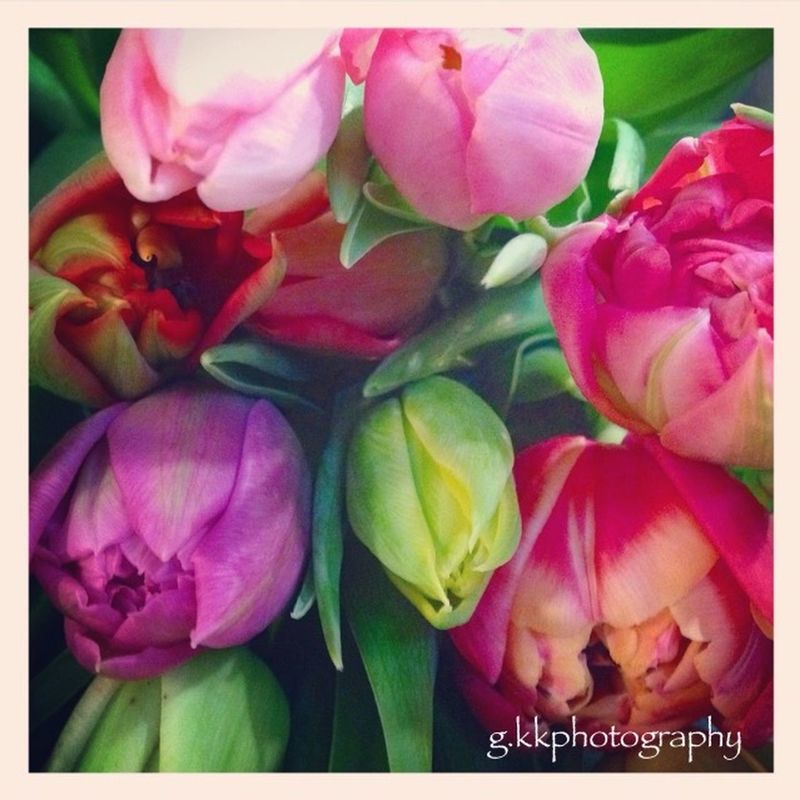 Colorful EyeEm Flower The First Fower Spring Flowers Eye Em Nature Lover Colors l Photography