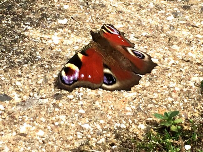 Butterfly, summer, wings, Chillin, Colourful, Summertime Summer Summer Views